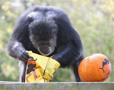 halloween_chimp